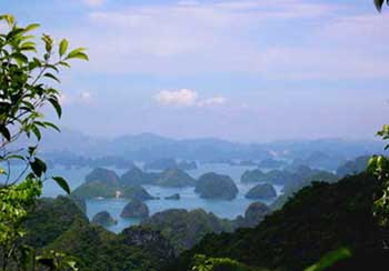 Trekking in Cat Ba National park, Kayaking in Cat Ba (2 days / 1 night)